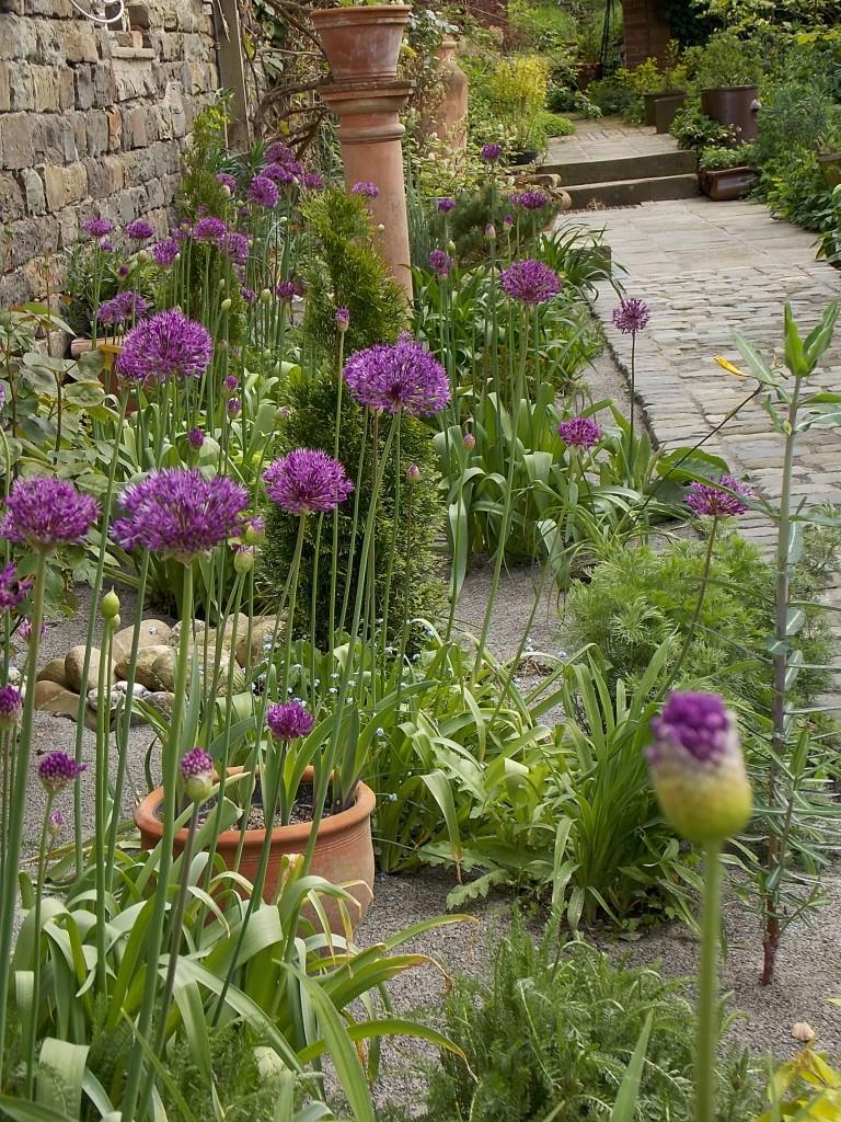 Im Frühling dominieren Allium , Zierlauch in unterschiedlichen Sorten.
